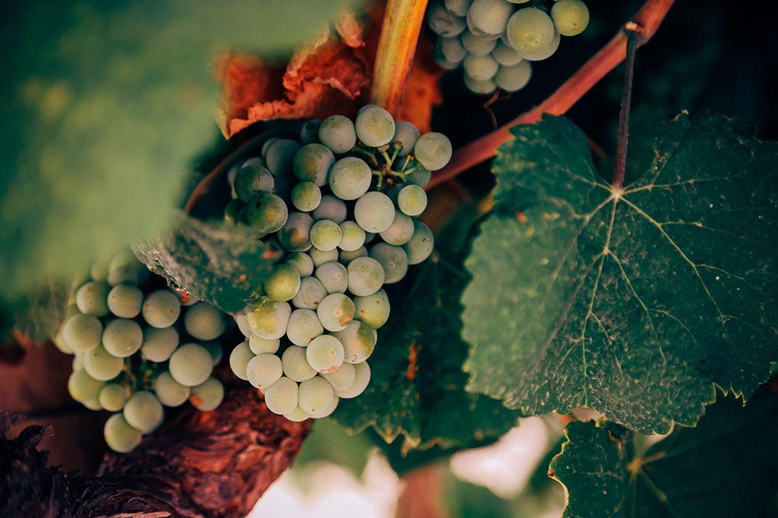 Revestimentos epoxy na indústria viníca e alimentar